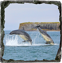 Bottlenose Dolphins Medium Square Slate ZB_15_MSL
