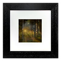 Callander Woods Falkirk Framed Print AS_50_5x5