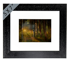 Callander Woods Falkirk Framed Print AS_50_5x7