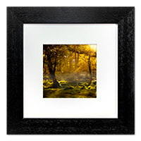 Forrest Framed Print AS_21_5x5
