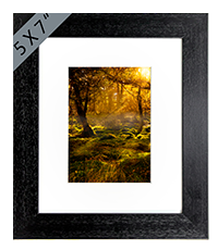 Forrest Wood Framed Print AS_21_5x7