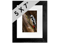 Greater Spotted Wood Pecker Framed Print FB_07_5x7