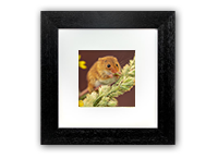 Harvest Mice Framed Print AJ_02_5x5