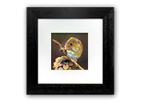 Harvest Mice Framed Print AJ_03_5x5