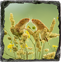 Harvest Mouse Medium Square Slate AJ_01_MSL