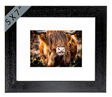 Highland Cow Framed Print AS_30_5x7