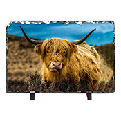 Highland Cow Slate AS_31_LS
