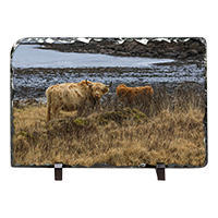 Highland Cow Slate ZB_44_LS
