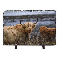Highland Cow Slate ZB_45_LS