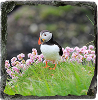Puffin Medium Square Slate ZB_17_MSL