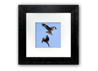 Red Kite Framed Print FB_05_5x5