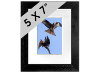 Red Kite Framed Print FB_05_5x7
