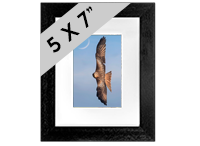 Red Kite Framed Print FB_06_5x7