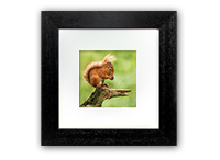 Red Squirrel Framed Print FB_08_5x5