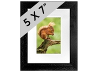 Red Squirrel Framed Print FB_08_5x7