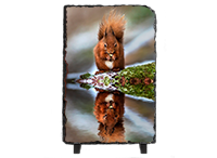 Red Squirrel Slate FB_04_LS