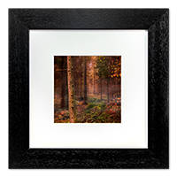 Rothiemurcus Woods Aviemore Framed Print AS_17_5x5