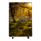 Woods Forrest Slate AS_21_LS