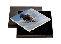 Bald Eagle Boxed Tile FB_11_BXTILE