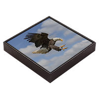 Bald Eagle Framed Tile  FB_11_FT