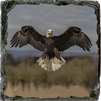 Bald Eagle Medium Square Slate FB_10_MSL