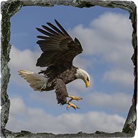 Bald Eagle Medium Square Slate FB_11_MSL