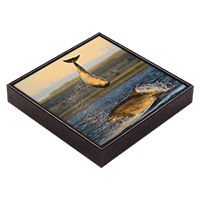 Bottlenose Dolphins Framed Tile ZB_05_FT