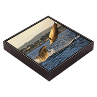 Bottlenose Dolphins Framed Tile  ZB_06_FT