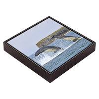 Bottlenose Dolphins Framed Tile  ZB_15_FT