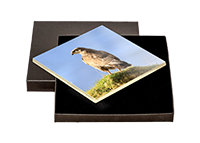 Buzzard Boxed Tile ZB_38_BXTILE