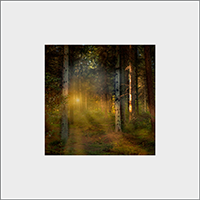 Callandar woods Mounted Print  AS_50_MM