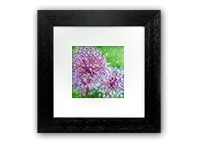 Flower Framed Print DM_10_5x5