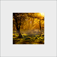 Forrest Mounted Print AS_21_MM
