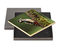 Greater Spotted Wood Pecker Boxed Tile FB_01_BXTILE