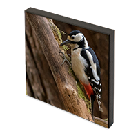 Greater Spotted Wood Pecker Photo Block FB_07_PB