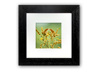 Harvest Mice Framed Print AJ_01_5x5