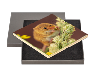 Harvest Mouse Boxed Tile AJ_02_BXTILE