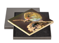 Harvest Mouse Boxed Tile AJ_03_BXTILE