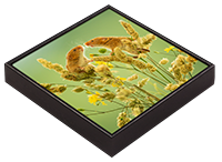 Harvest Mouse Framed Tile AJ_01_FT