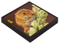 Harvest Mouse Framed Tile AJ_02_FT