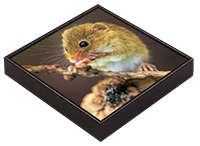Harvest Mouse Framed Tile AJ_03_FT