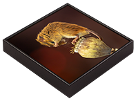 Harvest Mouse Framed Tile AJ_04_FT