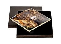 Highland Cow Boxed Tile  AS_30_BXTILE