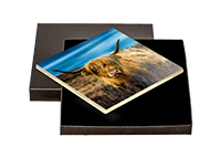 Highland Cow Boxed Tile  AS_31_BXTILE