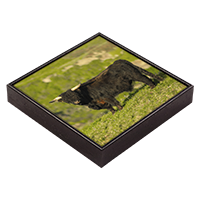 Highland Cow Framed Tile ZB_20_FT