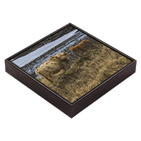 Highland Cow Framed Tile ZB_44_FT