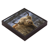 Highland Cow Framed Tile  ZB_45_FT