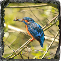 Kingfisher. Medium Square Slate ZB_53_MSL