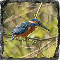 Kingfisher. Medium Square Slate ZB_55_MSL