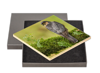 Male Sparrow Hawk Boxed Tile FB_02_BXTILE